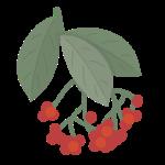 thumb_autumnberries